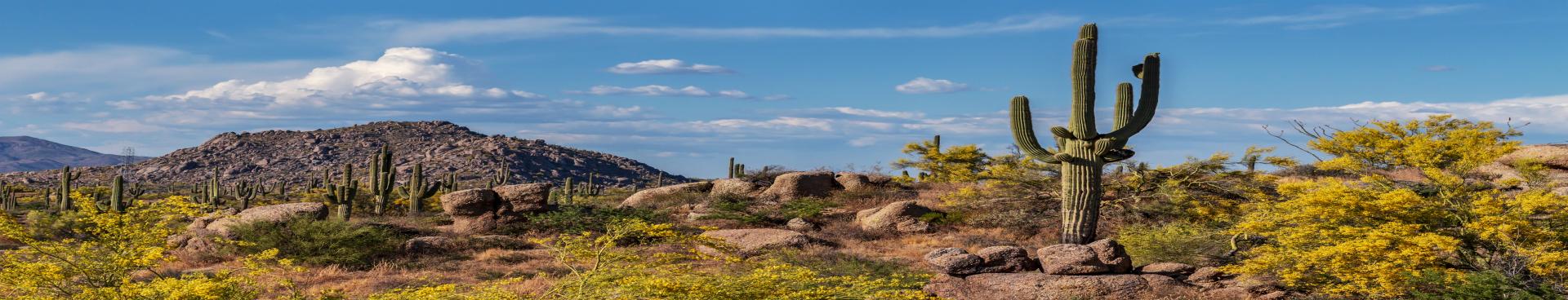 Arizona panorama resized